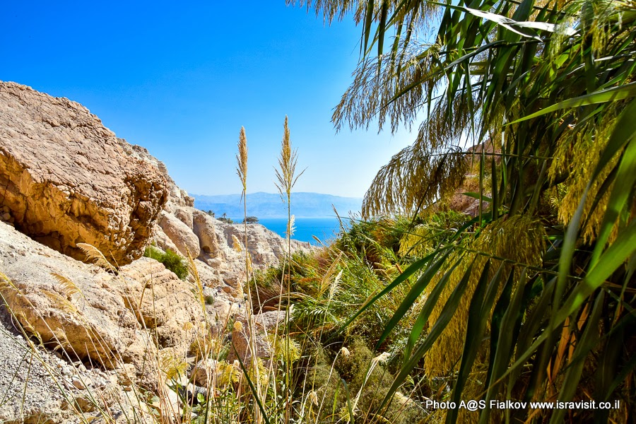Пейзаж Иудейской пустыни. Израиль, экскурсия в заповедник Эйн-Геди.