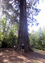 Photo: Pieni puu luonnonpuistossa