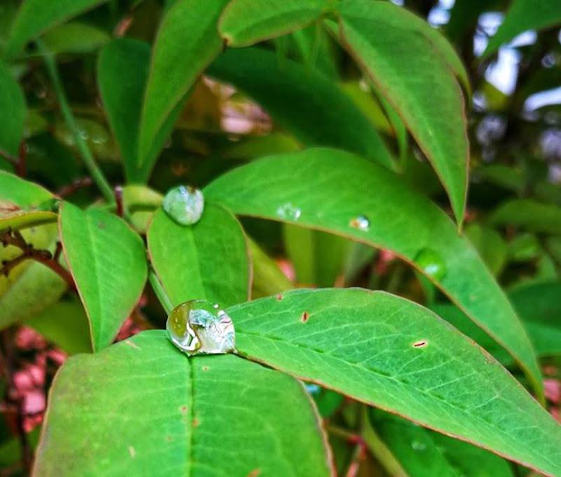 Goccioline di pioggia di Antopaga
