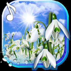 Подснежники Весна Ранняя Живые Обои