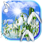 Snowdrops Springs Early Live Wallpaper