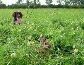 Photo: Hé wat zie ik daar ....een konijntje