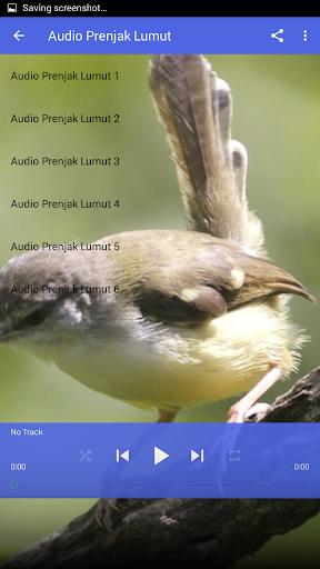 Suara Prenjak Lumut Master : suara, prenjak, lumut, master, Download, Suara, Burung, Ciblek, Gacor, Belajar