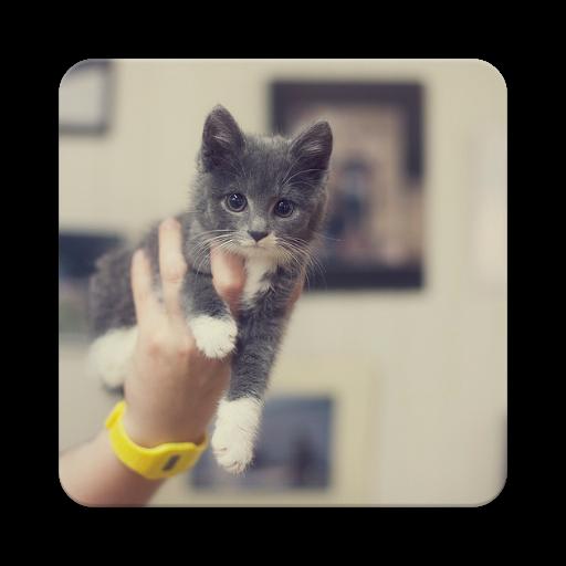 Really Cute Cats (app)
