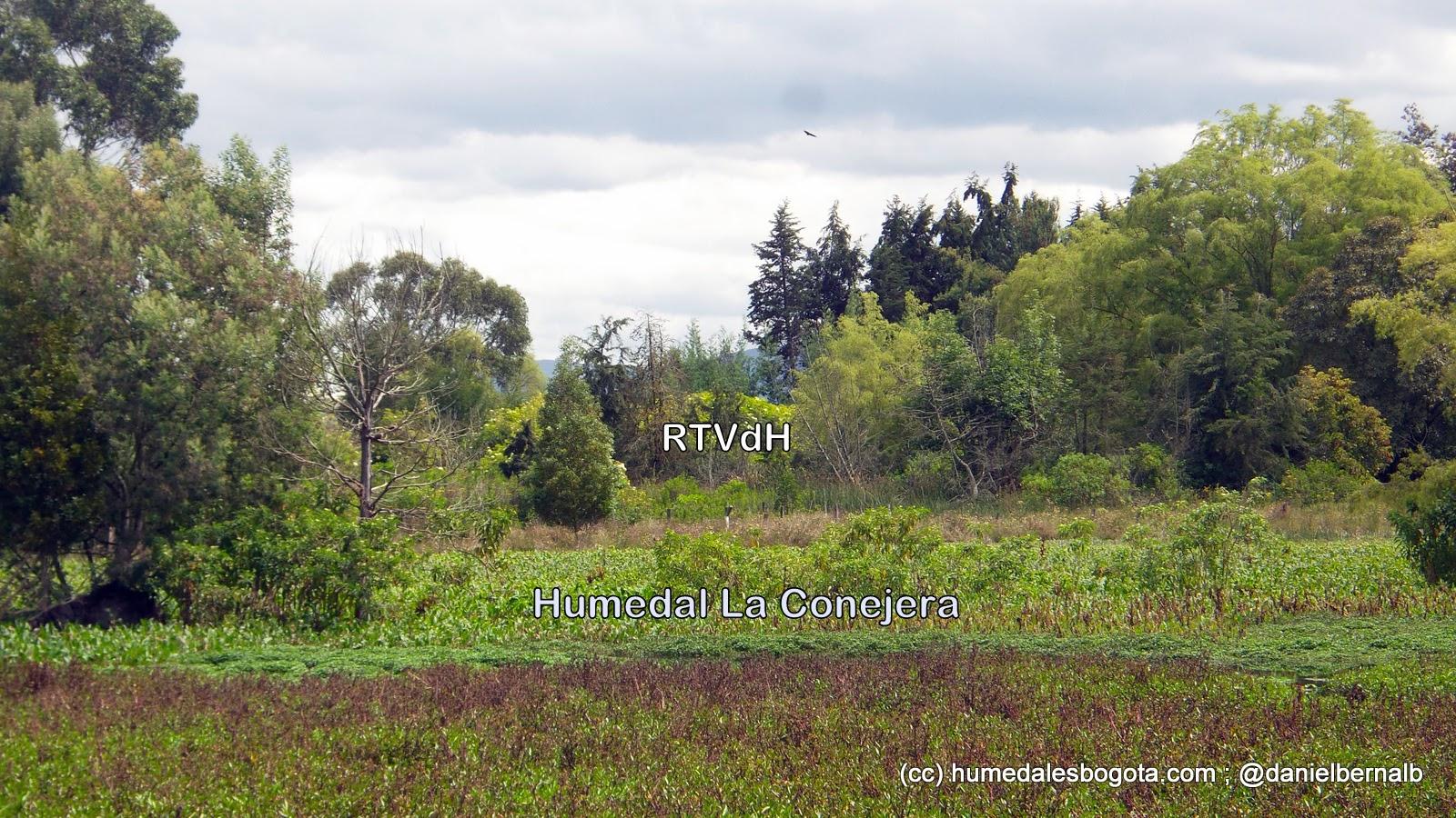 Humedal La Conejera vecino a la Reserva Thomas Van der Hammen
