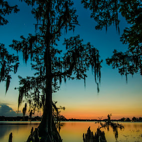 Cypress Sunset by David Ubach - Landscapes Waterscapes ( water, sunsets, trees, landscapes, waterscapes )