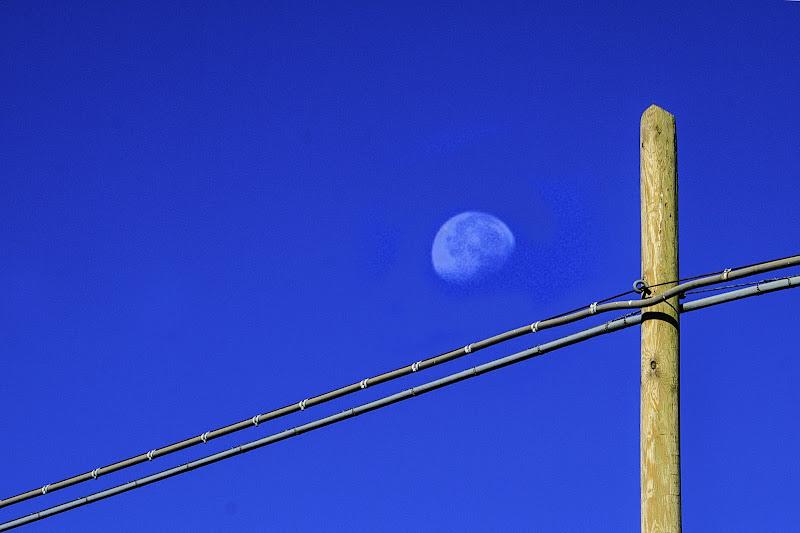 azzurro di Saltini Rino
