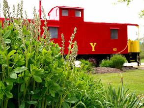 Photo: ACY Caboose And Flowers, Copley, Ohio