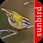 App Icon for Vogel Id Schweiz - Gartenvögel identifizieren App in Czech Republic Google Play Store