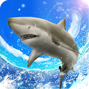 Wild Shark Fishing