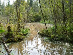 Photo: Ближний ручей. Вновь укрепленная и расширенная третья плотина каскада. (вторая вниз от Хатки)