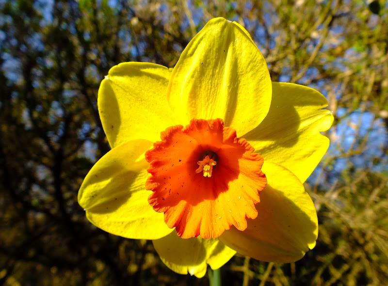 fioritura di alberto corsini