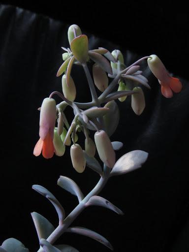 Mes petites plantes grasses et cactées - Page 2 LqXw6bNXfw3E_yVq90BERMzCegsQzFfyN204HHxJ92DCT3JQm9NwvLKu4gtHZXDHAHytsxzpqga63Ub3cxajfDbELneIvMQz5qDQ9FAAvbuLj0YvTJhe72RvUvbpMZOcJsZ7GL0