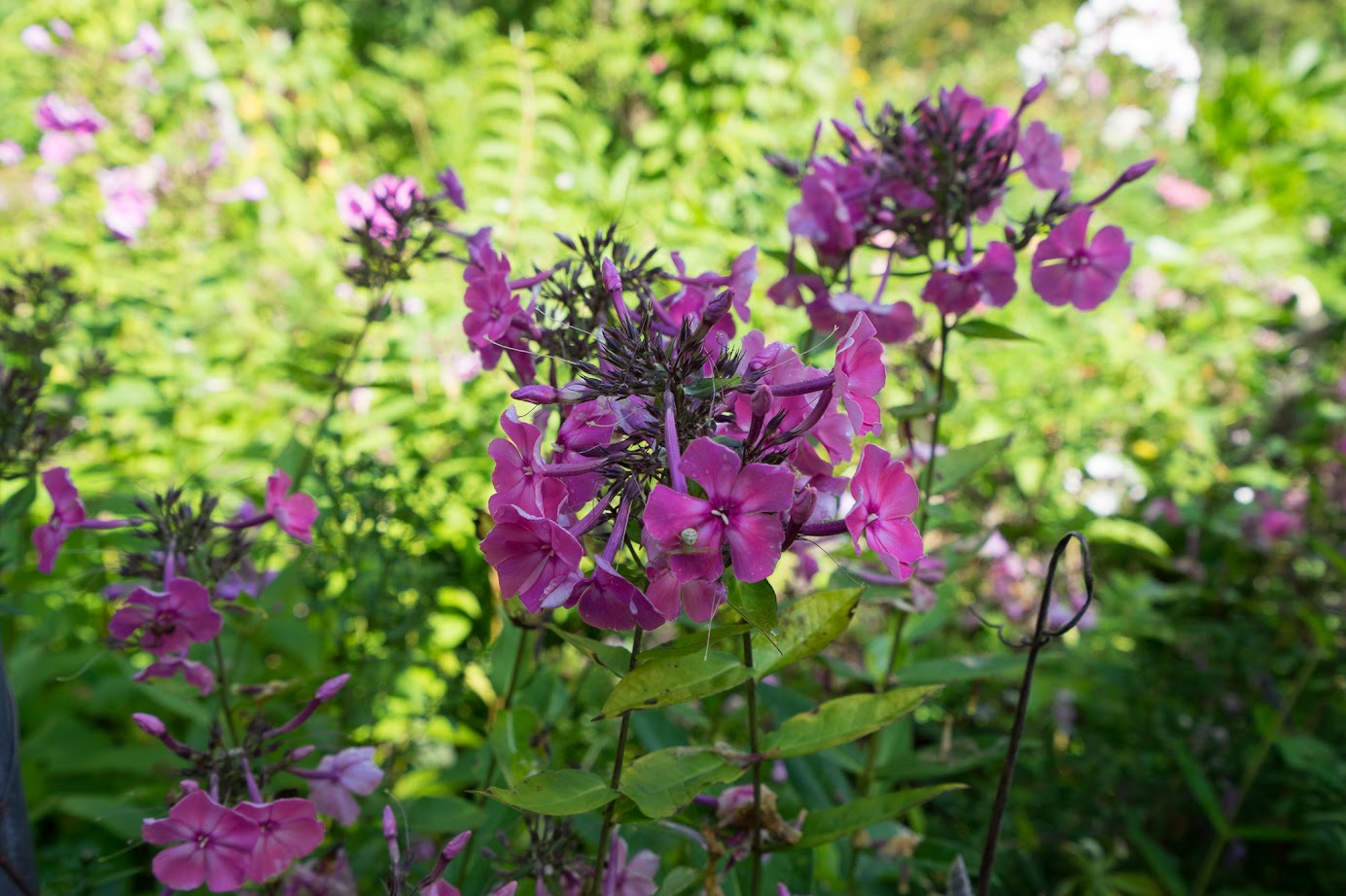 園内8haの敷地に800種類以上の花が咲く