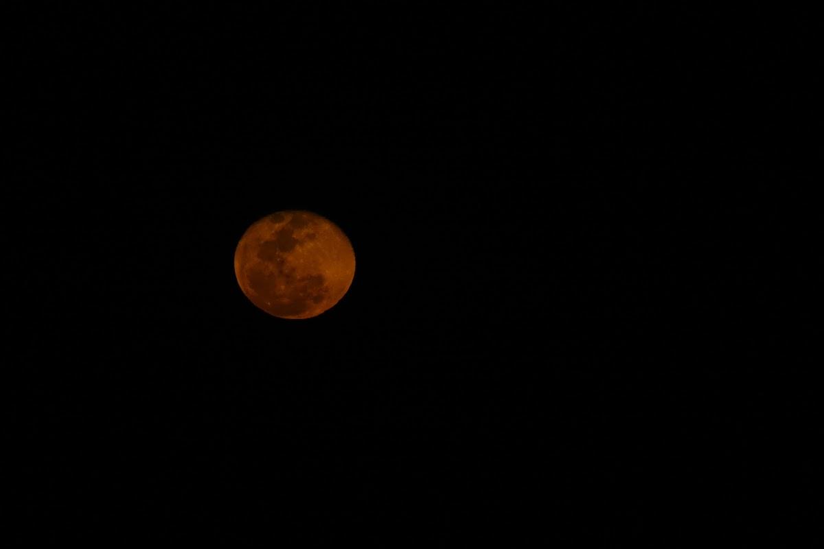 India. Rajasthan Thar Desert Camel Trek. Full red moon.