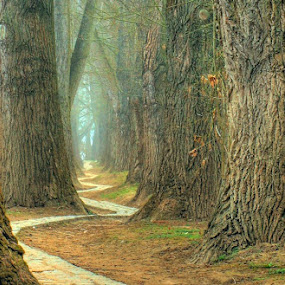 by Vasile Anusca - Landscapes Forests