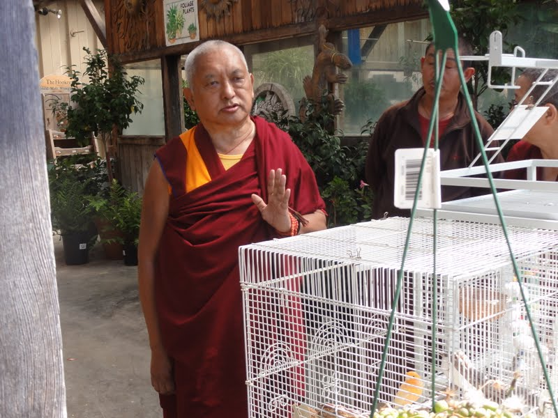 Rinpoche blessing some birds in a flower shop in Watsonville, CA