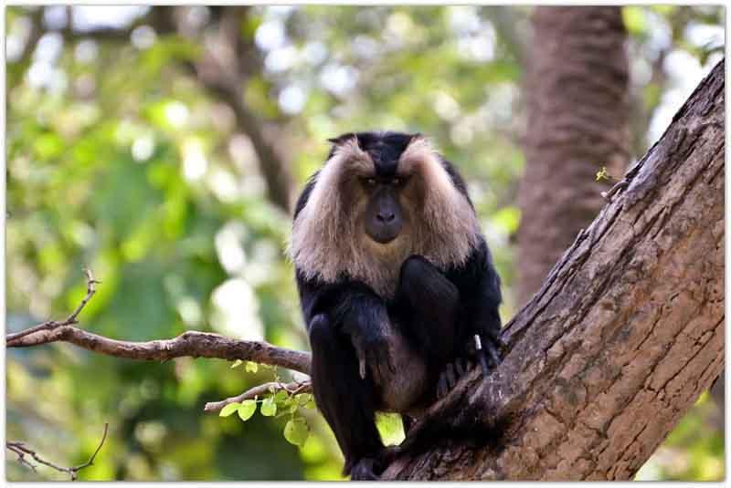 Macau at Chandigarh zoo