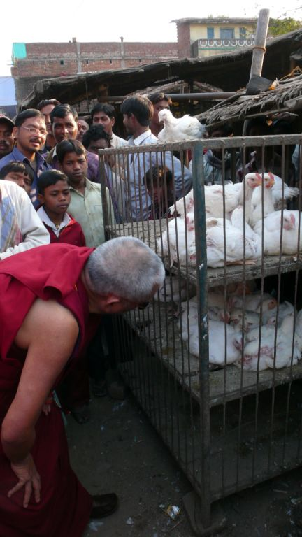 blessing chickens that are going to be killed, in the end Rinpoche bought them all