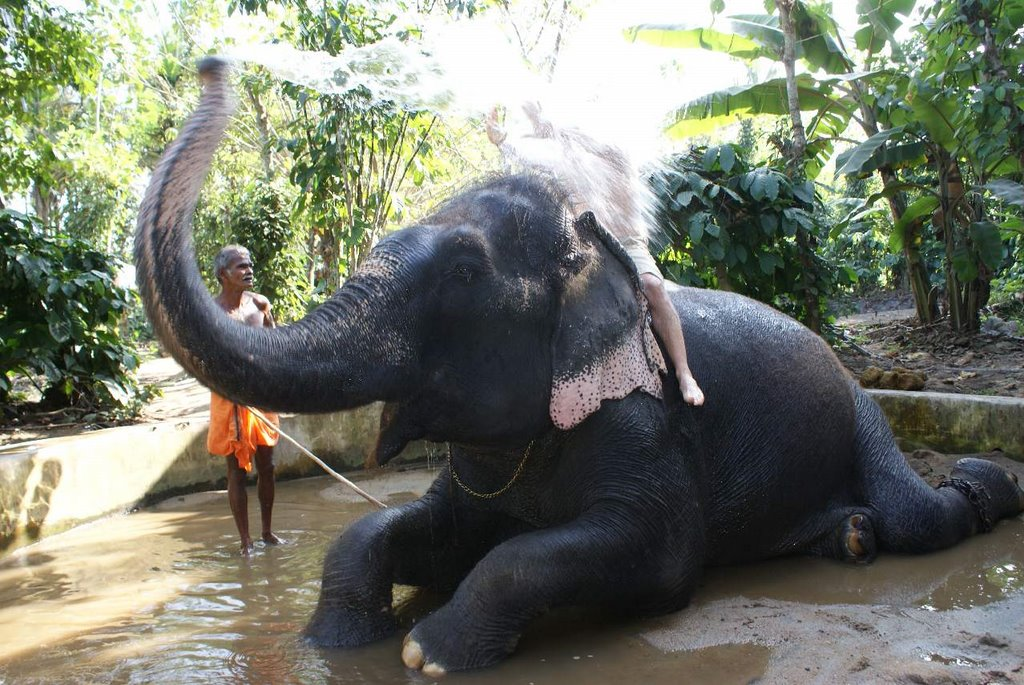 Elephant Shower - Flavio didn't know what will happen haha...