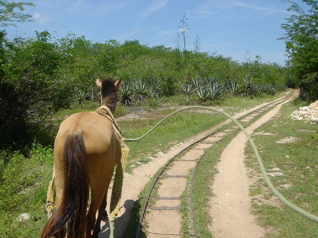 gezogen von Pferden