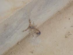 Bila jedna mala škorpija pored mog šatora