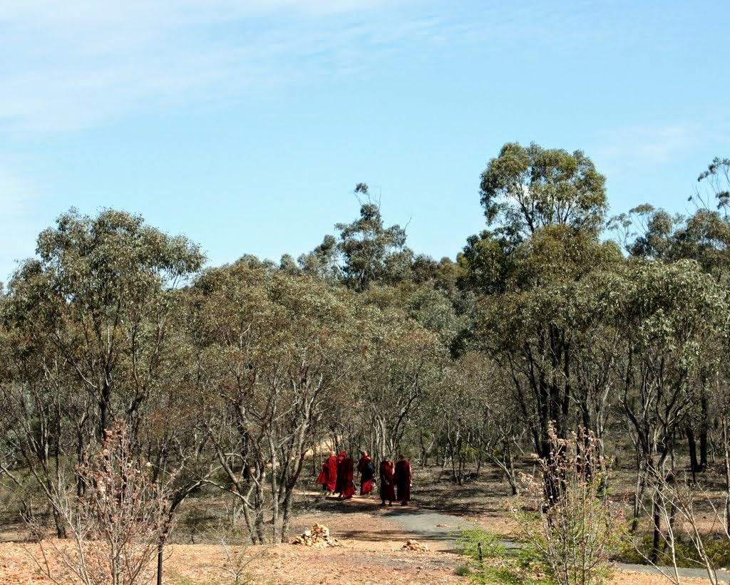 Lama Zopa Rinpoche following the path from the Great Stupa of Universal Compassion to Thubten Shedrup Ling, Australia, September 2014. Photo by Laura Miller.