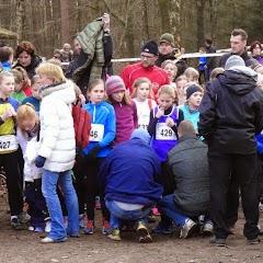 08/02/15 Haelen (Nl) Veldloop