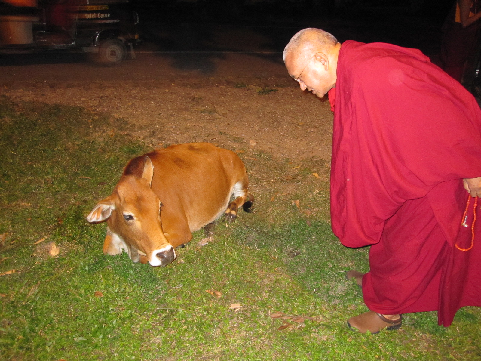 reciting mantras for animals