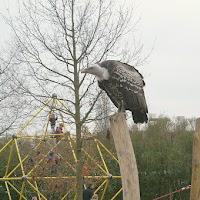 Opening Speeltuin en Roofvogelshow 17 maart 2007 - Nr_125