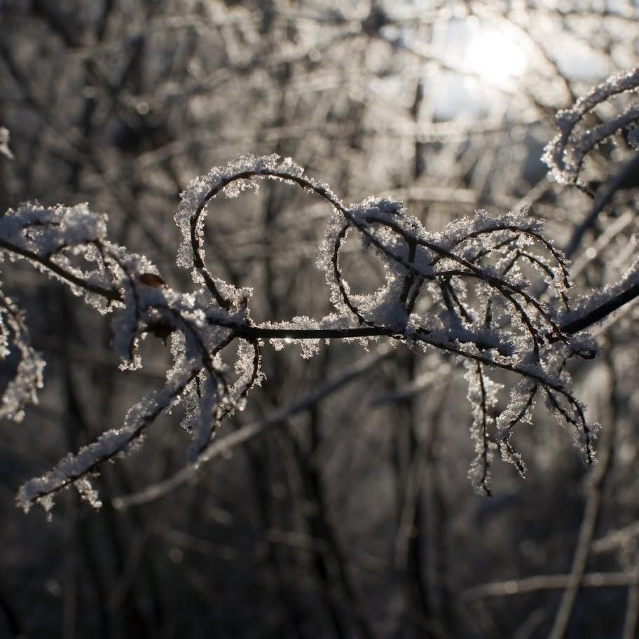 Zimní větvičky 2010 - _DSC9785