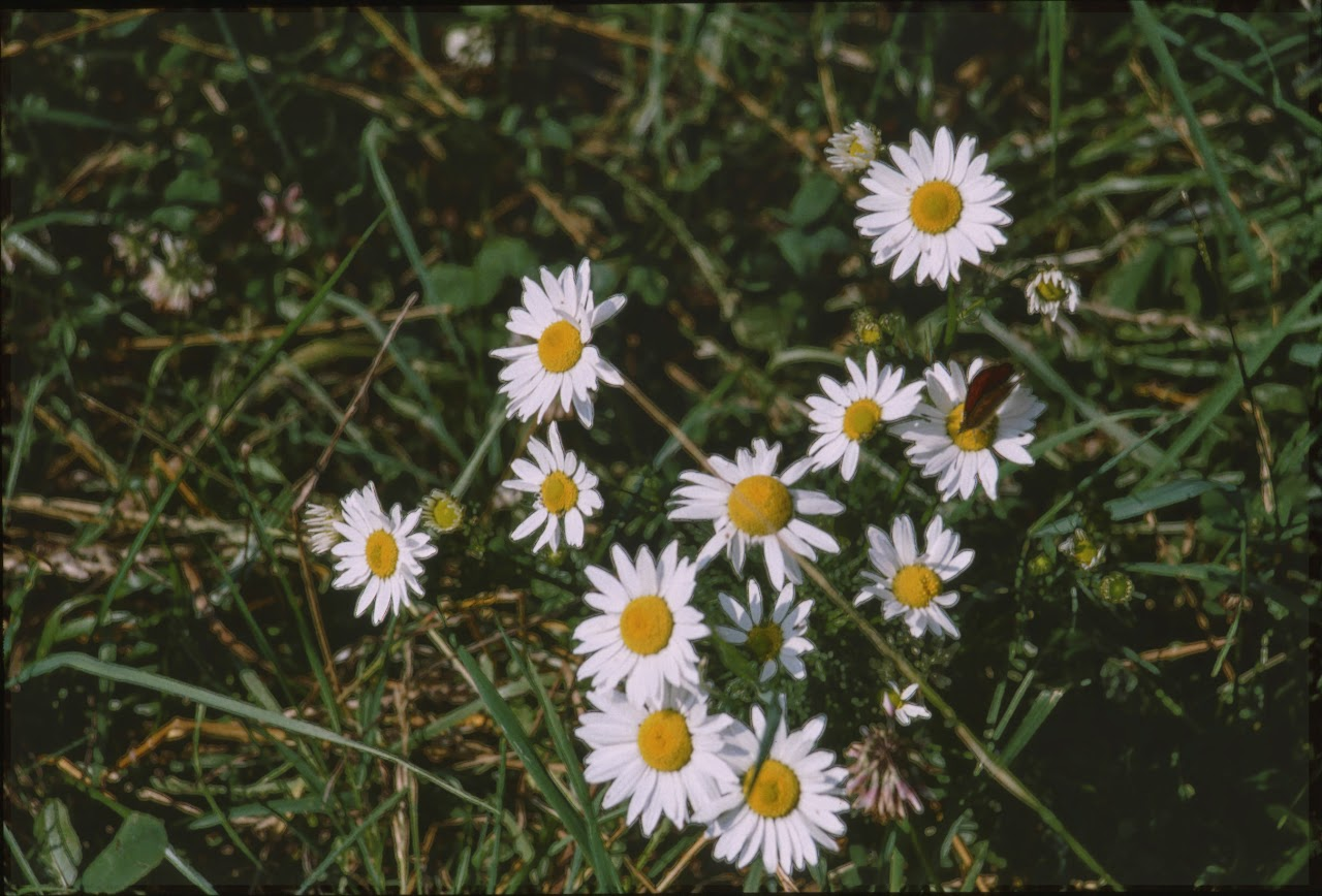 1995 Sommerlager - Sola95_034