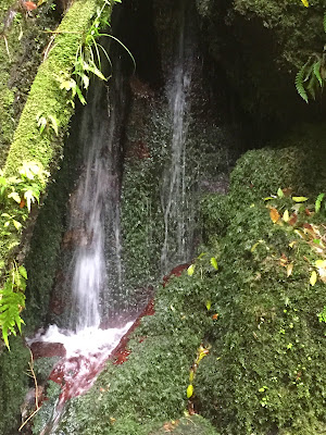 The cascades on the Te Auheke track