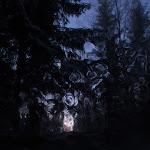 Nerlikoia (Autor: Christin Götz)