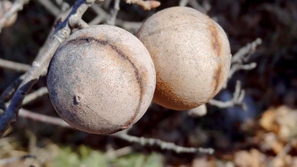 Balls :-)
