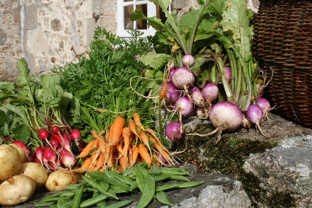 La récolte de légumes du château de Bourgon