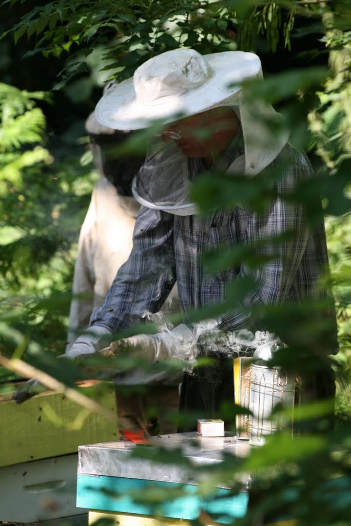 Alain entretient ses ruches