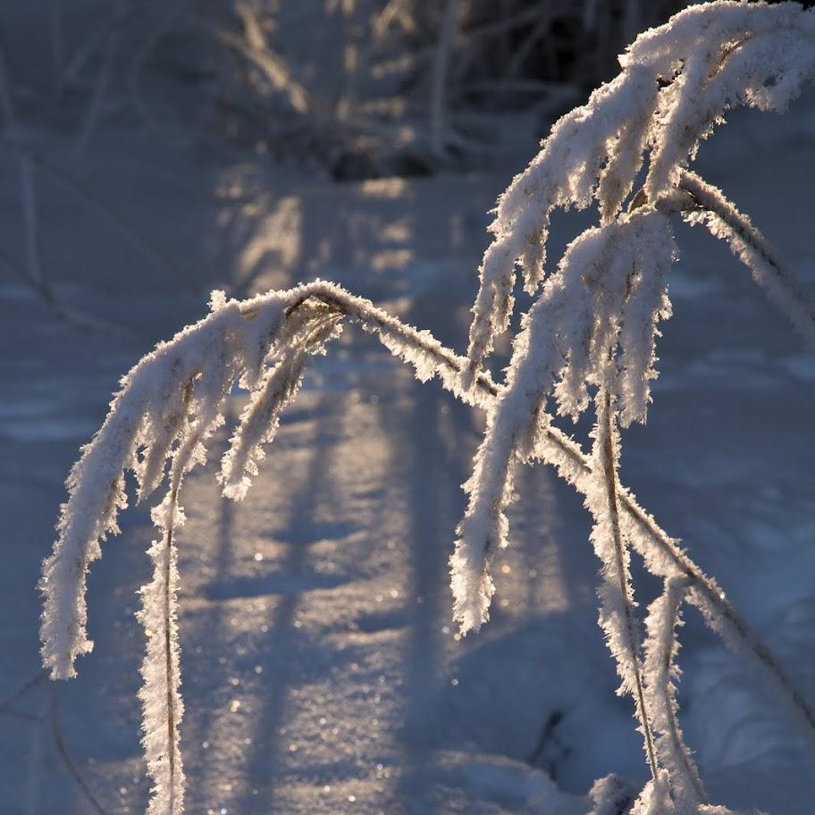 Zimní větvičky 2010 - _DSC9899