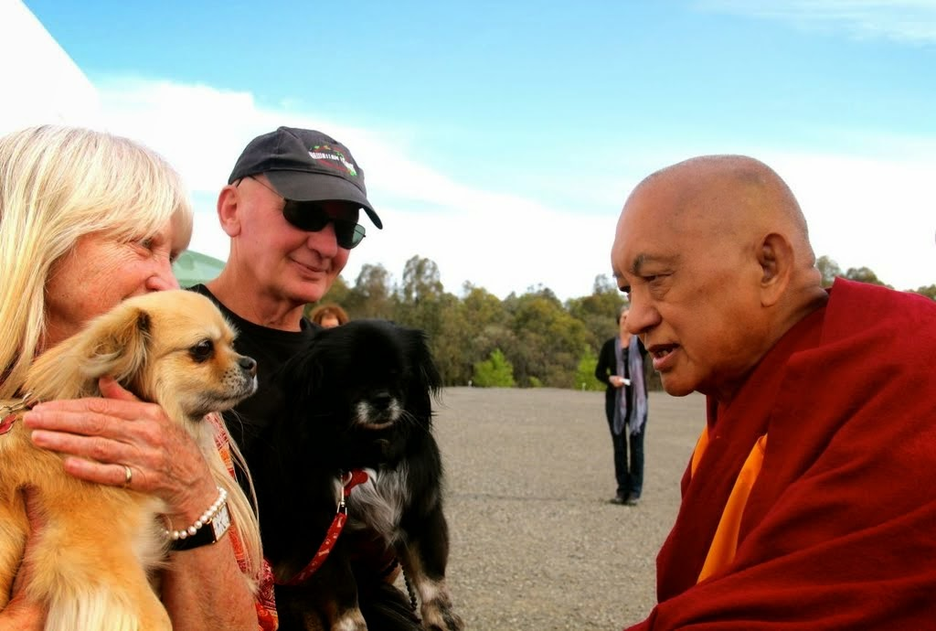 Lama Zopa Rinpoche blessing the dogs Nyingdu and Chonyi outside of the Great Stupa of Universal Compassion, Australia, October 2014. Photo by Drolkar McCallum.