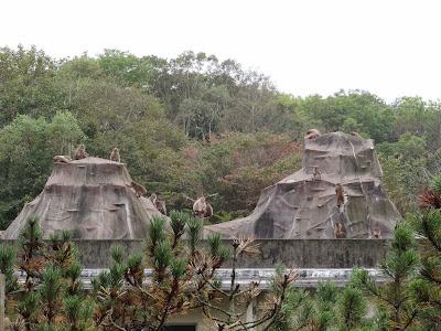 """""""Monkey Mountain"""""""
