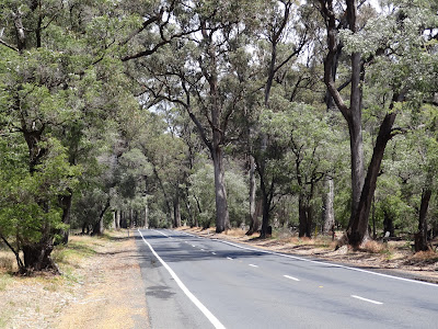 forrest frive between Bunbury and Busselton