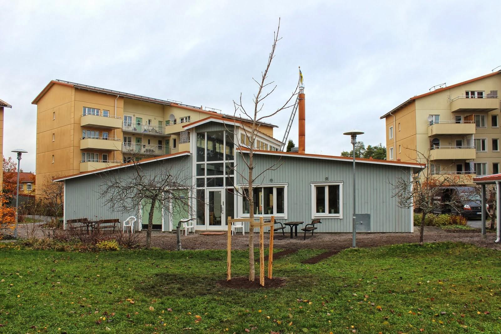 Den nyplanterade kastanjen med föreningshuset i bakgrunden.