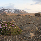 Scarce tundra plants are still able to survive somehow!