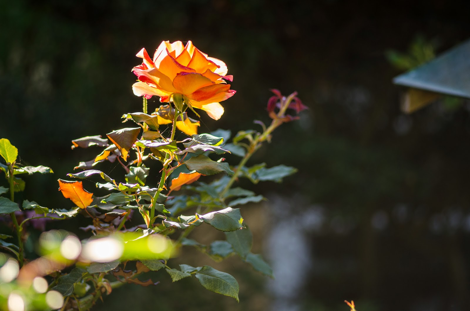 Flowers in the garden at Kachoe Dechen Ling. Photo by Chris Majors.