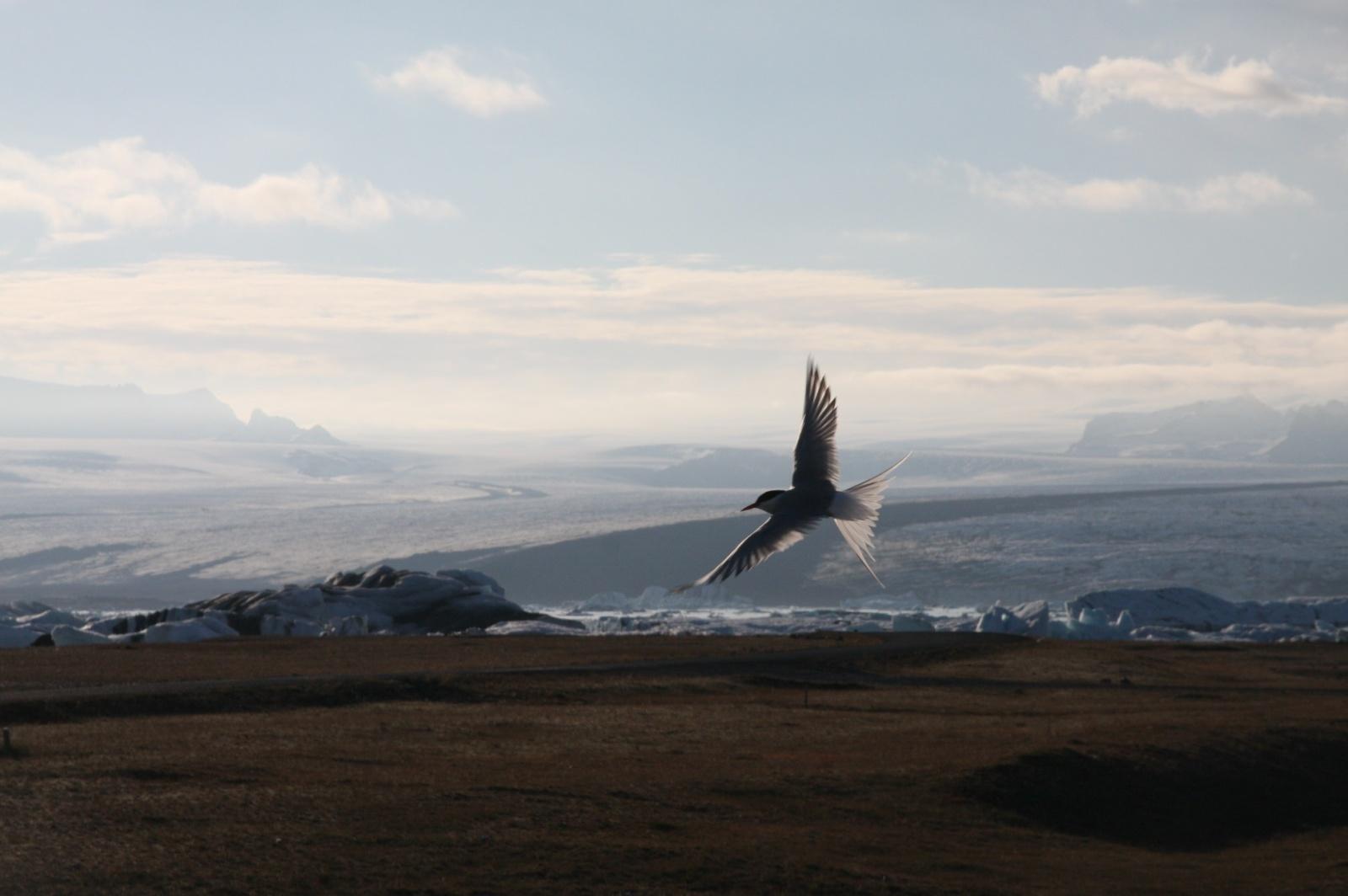 Approaching the glacier and Jökulsárlón