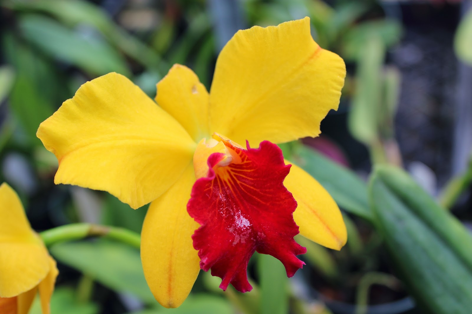 Tropical gardens of Hawaii