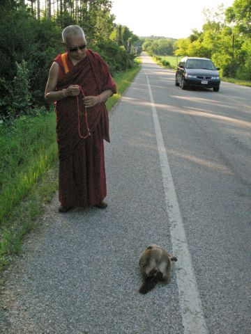 Lama Zopa Rinpoche blessing animal that has been hit on the side of the road in WI, USA