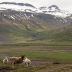 On the way to East Fjords