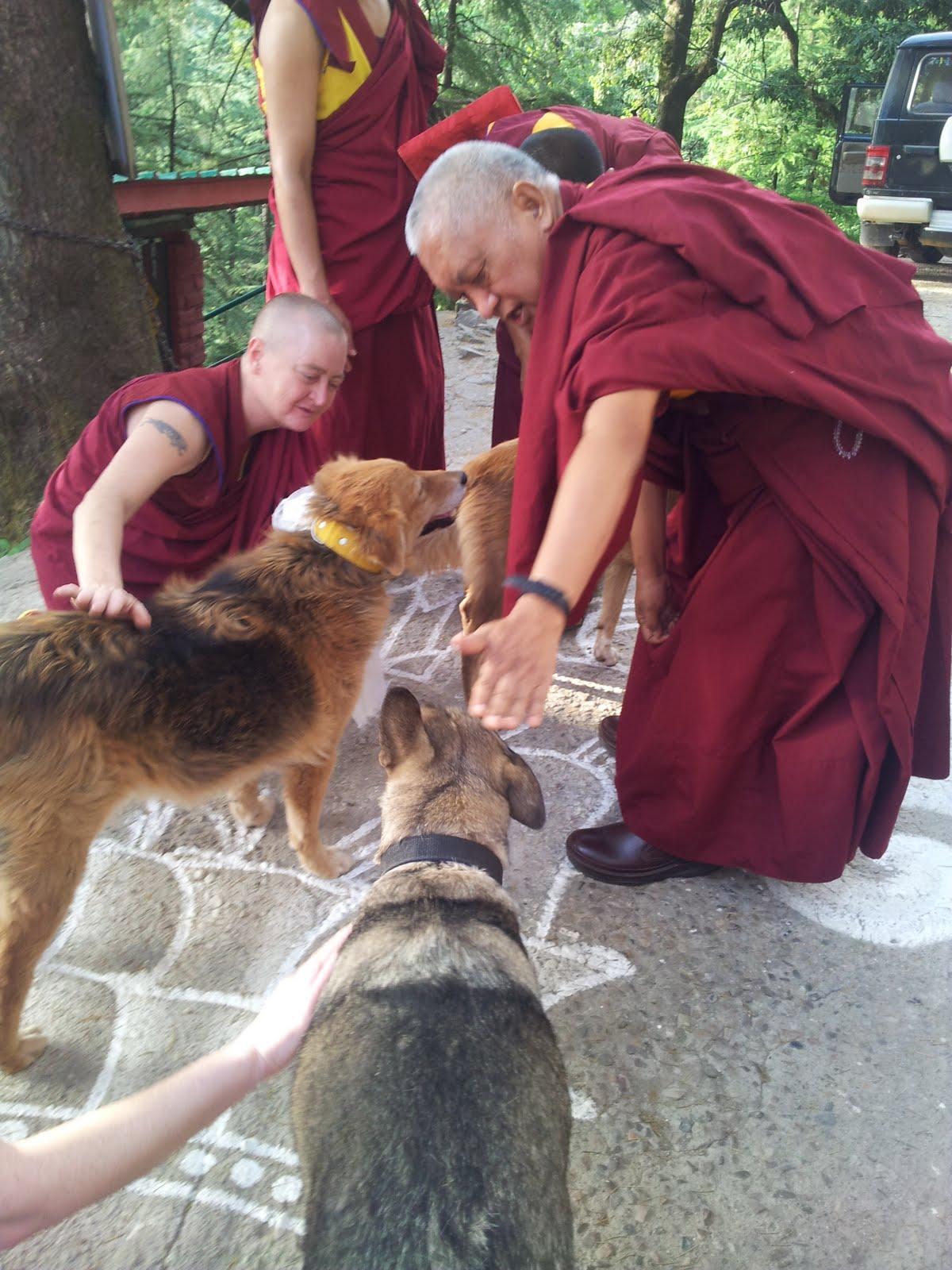 Blessing dogs at Tushita on Sakadawa. 25 May 2013. Photo: Ven.Roger Kunsang