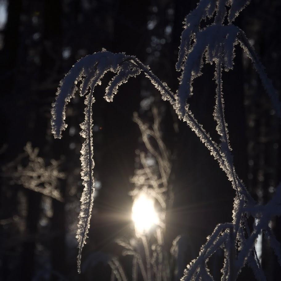 Zimní větvičky 2010 - _DSC9907
